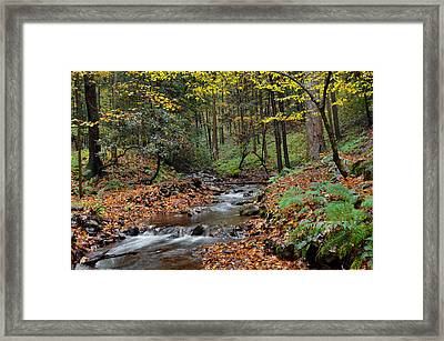 Forest Stream In Autumn Framed Print by Stephen  Vecchiotti
