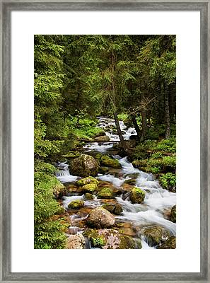Forest Stream In Tatra Mountains Framed Print by Artur Bogacki