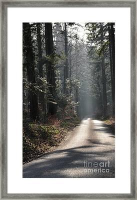 Forest Street 1 Framed Print by Bruno Santoro