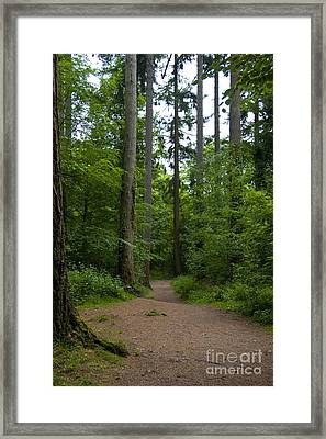 Forest Trail Framed Print by Ron Telford