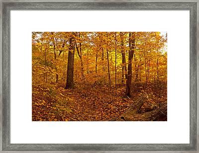 Forest Trail Framed Print