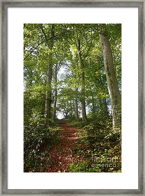 Forest Way Framed Print by Bruno Santoro