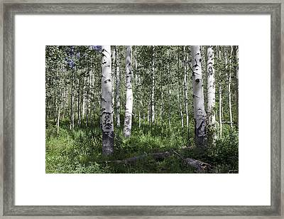 Forever Aspen Trees Framed Print by Madeline Ellis