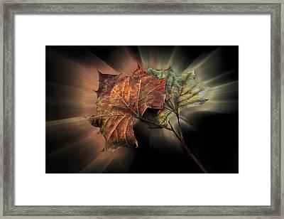 Forever Autumn Framed Print by Debra and Dave Vanderlaan