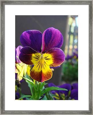 Forget-me-not Framed Print