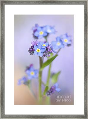 Forget-me-not Spring Framed Print by Jacky Parker