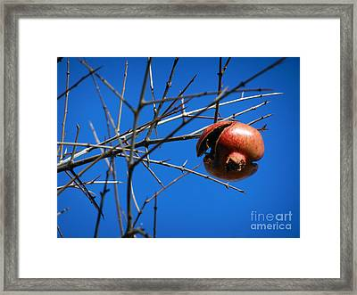 Forgotten Pomegranate  Framed Print by Alexandra Jordankova