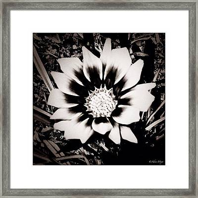Formal Flower - Tuxed And Ready To Take Framed Print