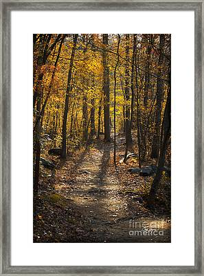 Forrest Of Gold Framed Print