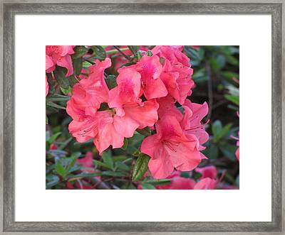 Framed Print featuring the photograph Fort Worth Botanical Gardens Springtime by Shawn Hughes