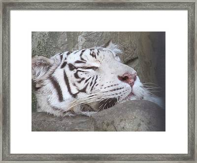 Framed Print featuring the photograph Fort Worth Zoo by Shawn Hughes