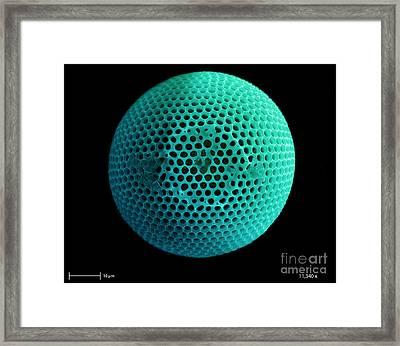 Fossil Diatom, Sem Framed Print by Ted Kinsman