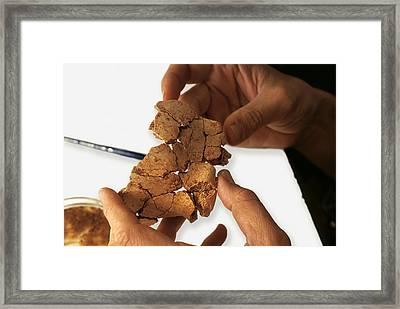 Fossilised Frontal Bone, Gran Dolina Framed Print by Javier Truebamsf