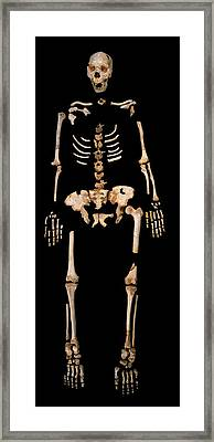 Fossilised Remains, Sima De Los Huesos Framed Print by Javier Truebamsf