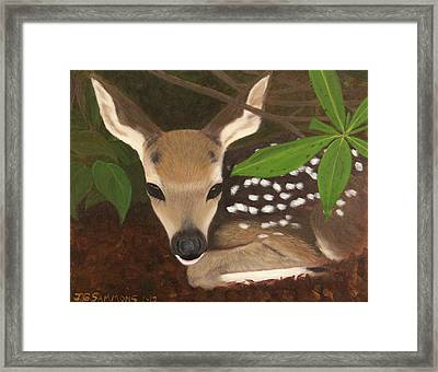 Found A Fawn Framed Print