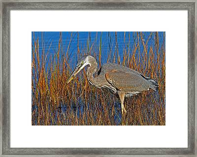 Found An Appetizer Framed Print by Mike Martin