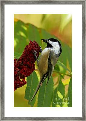 Found My Hiding Spot.... Hope No One Is Looking Framed Print by Inspired Nature Photography Fine Art Photography