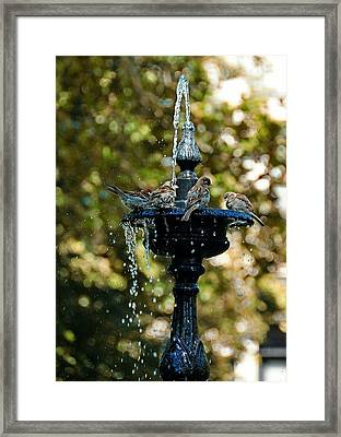 Fountain Bathing Framed Print by JAMART Photography