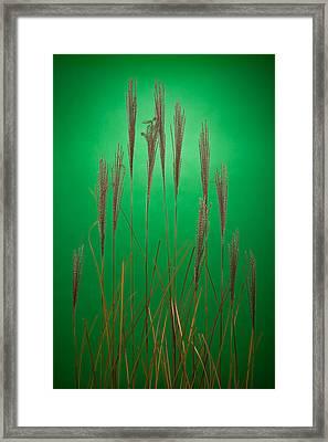 Fountain Grass In Green Framed Print by Steve Gadomski