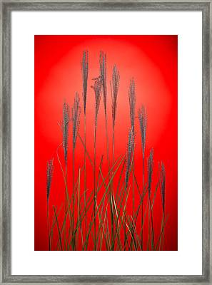 Fountain Grass In Red Framed Print by Steve Gadomski