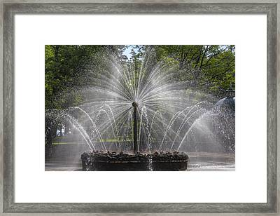 Fountain  Peterhof Palace  St Petersburg   Russia Framed Print by Clare Bambers