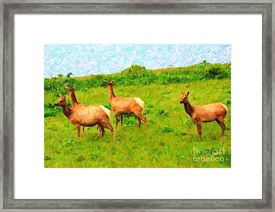 Four Elks Framed Print