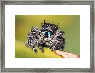 Four Eyes Framed Print