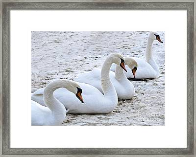 Four Graces Waiting For The Spring Framed Print by Heiko Koehrer-Wagner