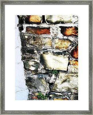 Four Leaf Clover Framed Print by Todd Sherlock