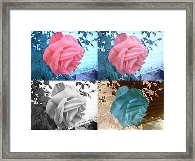Four One Rose Framed Print
