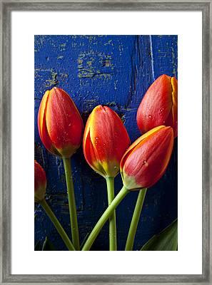 Four Orange Tulips Framed Print by Garry Gay