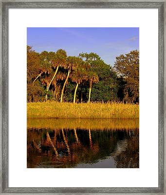 Four Palms Reflecting In Myakka Lake Framed Print