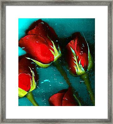 Four Roses Framed Print