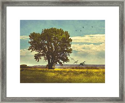 Four Seasons Summer Heat Framed Print by Georgiana Romanovna