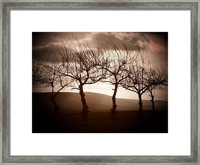 Four Trees Framed Print by Michael L Kimble