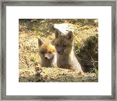 Fox Den Dawn Framed Print by Chuck Berk