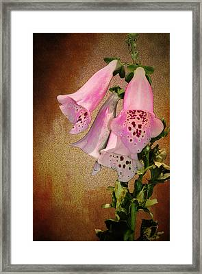 Fox Glove Grunge Framed Print by Bill Cannon