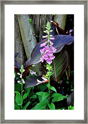 Framed Print featuring the photograph Foxglove by Helen Haw