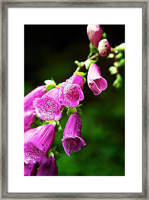 Framed Print featuring the photograph Foxglove by Joe Urbz