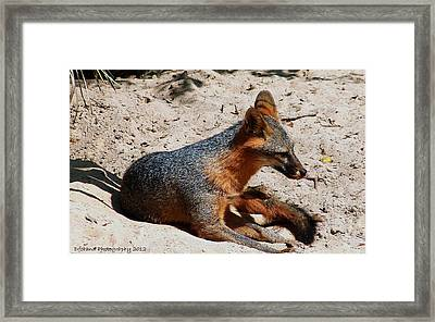 Foxie Framed Print by Debra Forand