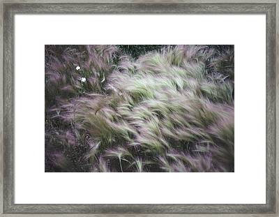 Foxtail Barley And Campion Framed Print