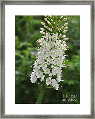 Framed Print featuring the photograph Foxtail Lily by Tanya  Searcy