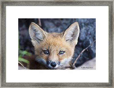 Foxy Cute Framed Print
