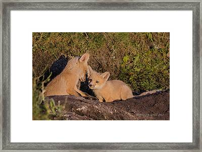 Foxy Talk Framed Print