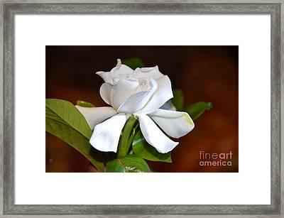 Fragrant Flower Framed Print by Jiss Joseph