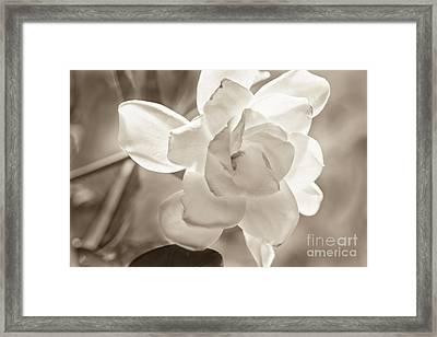 Fragrant Glow Framed Print