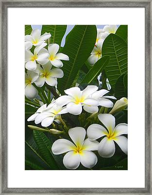 Framed Print featuring the photograph Fragrant White Plumeria by Kerri Ligatich