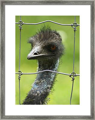 Framed Framed Print by Barbara  White