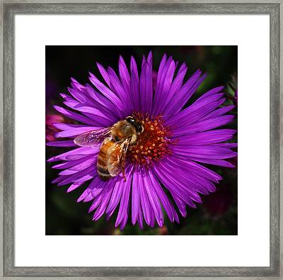 Framed In Purple Framed Print