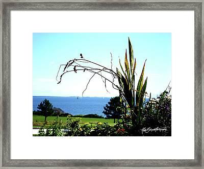 Framing The Bay Framed Print by Ruth Bodycott